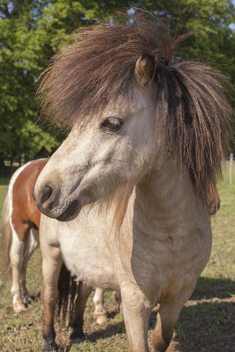 poney 2